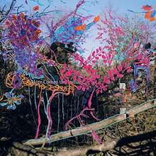 Animal Collective: Here Comes The Indian