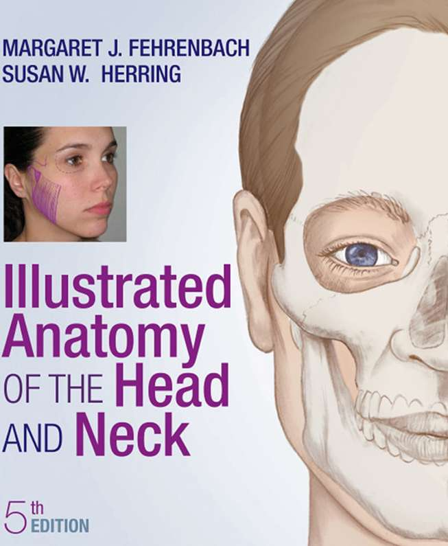 Illustrated Anatomy of the Head and Neck - Heimkaup.is