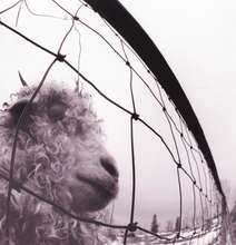 Pearl Jam: Vs